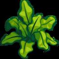 SeaPlants Sea Lettuce-icon