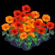 Poppyfield-icon