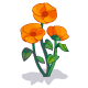 Orange Poppy-icon