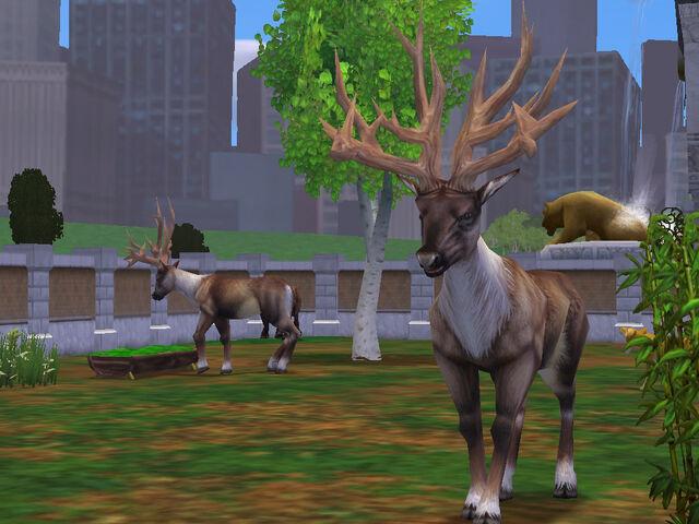 File:Bush-Antlered Deer2.jpg