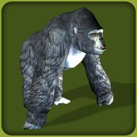 File:Mountain Gorilla.jpg