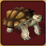 File:African Spurred Tortoise.jpg