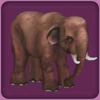 File:Asian Elephant.jpg