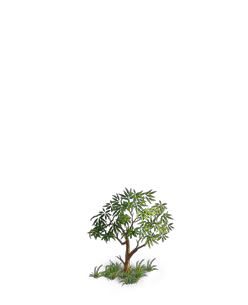 File:Tree 5.png