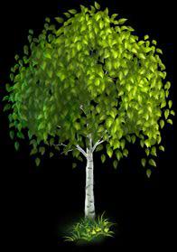 File:Birch Tree.png