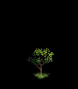 File:Oak Tree 5.png